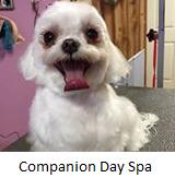 Companion Day Spa